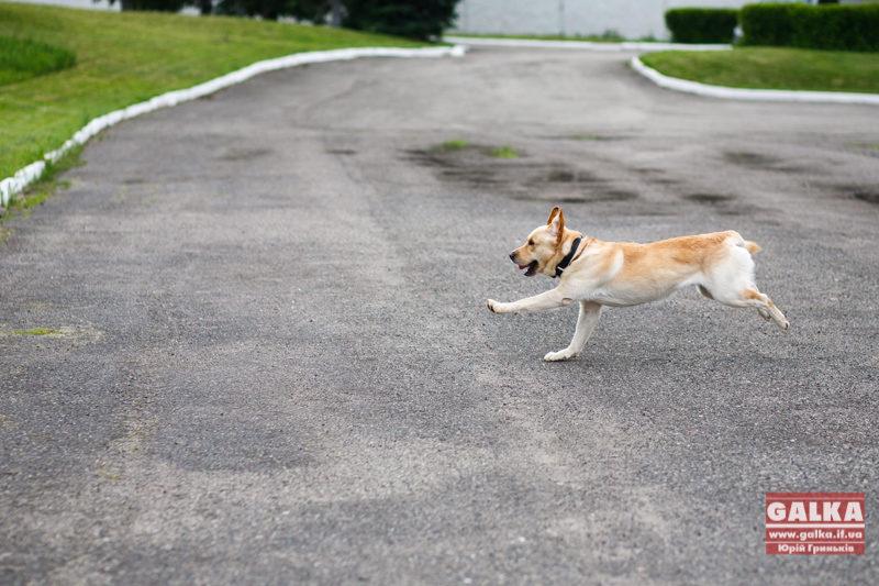 Собаки схожі на своїх зіркових власників – дослідження