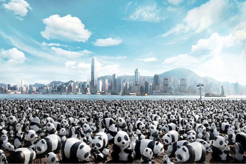 Гонконг заполонили 1600 панд