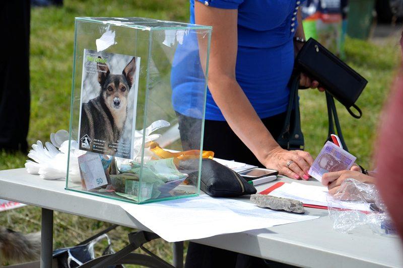 Гроші, зібрані на конкурсі собак, направлять на допомогу армії
