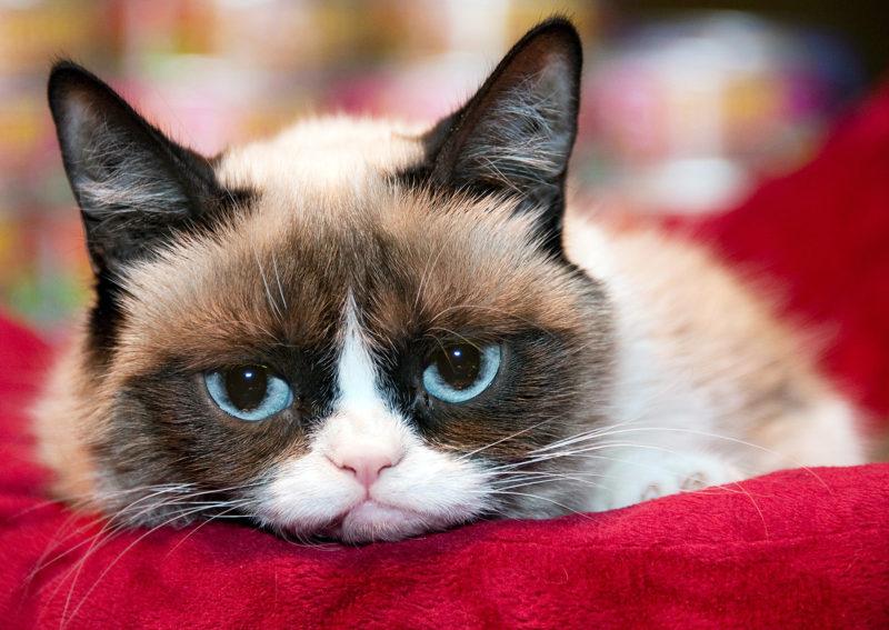 """""""Сердитий кіт"""" заробляє більше ніж  Кеті Перрі"""