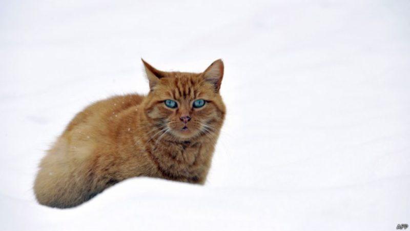Аеропорт Владивостока поплатиться за ненажерливого кота