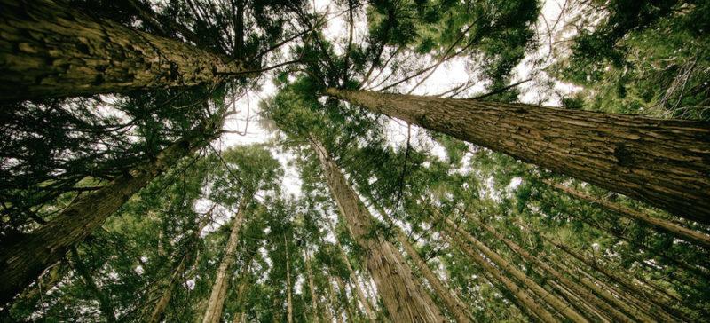 Суд повернув Коломийському лісгоспу гектар землі
