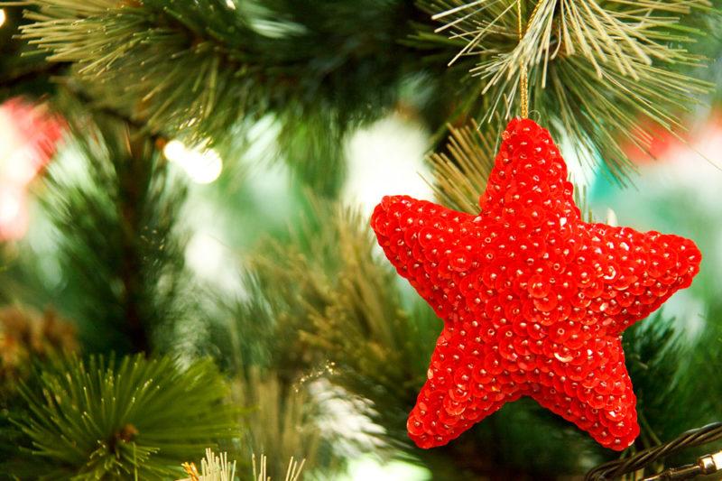 Лісівники закликають прикарпатців правильно утилізовувати новорічні ялинки