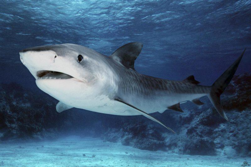 У Мережі з'явилося відео неймовірного порятунку акулят із черева мертвої мами-риби
