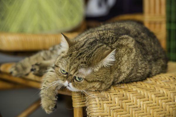 Професійний фотограф зробив свою кішку зіркою