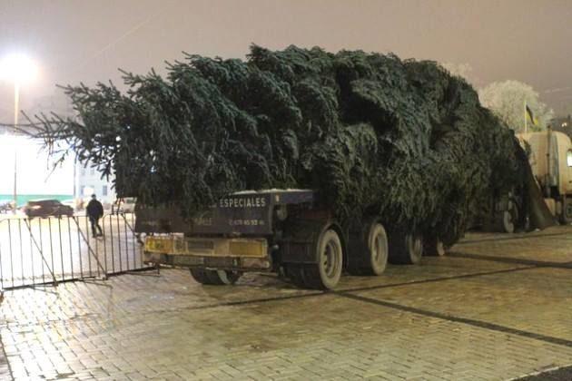 Івано-франківська ялинка приїхала до Києва (фото)