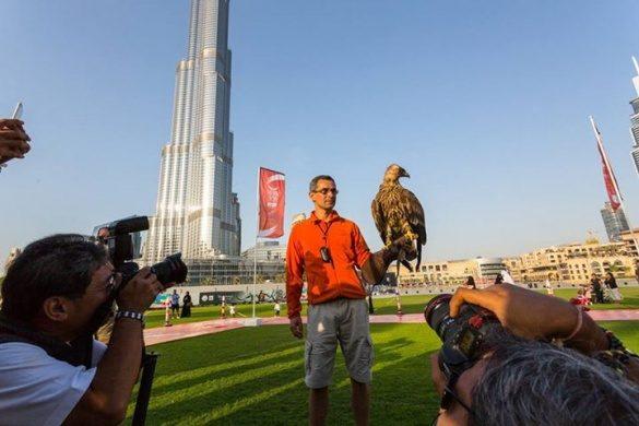Орел зняв на відео свій політ з найвищої будівлі в світі (ВІДЕО)