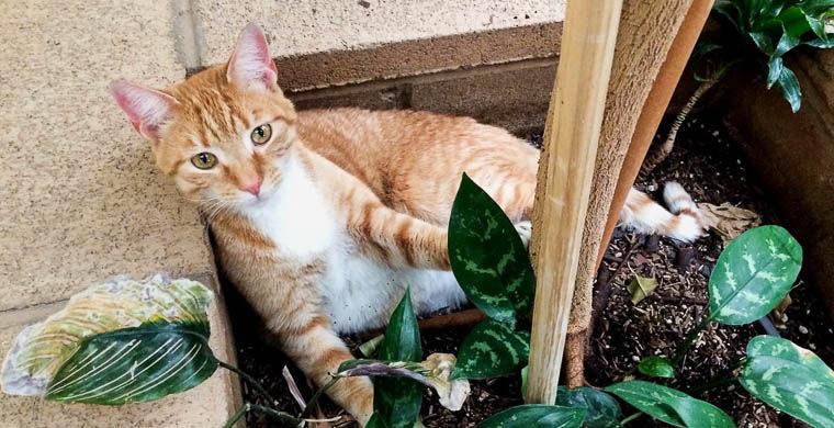 У США кіт подорожував автостопом два роки (ВІДЕО)
