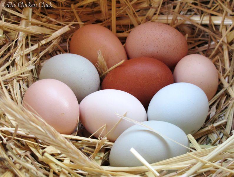 Галка рекомендує: чому варто їсти яйця щодня (ВІДЕО)