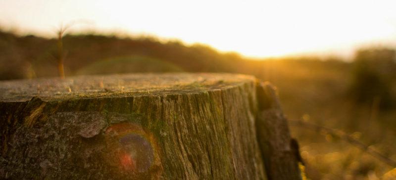 Ліснику загрожує 3 роки тюрми або штраф за те, що на його ділянці вирубали дерев на 93 тисячі гривень