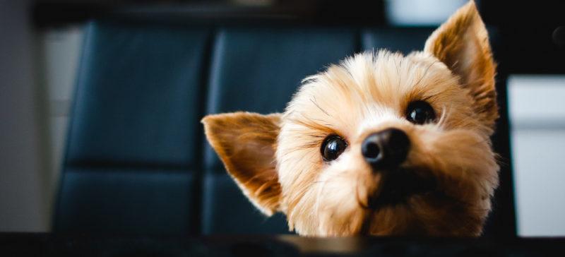 Соцмережі жартують: у Верховній Раді прийняли закон про податок на тварин