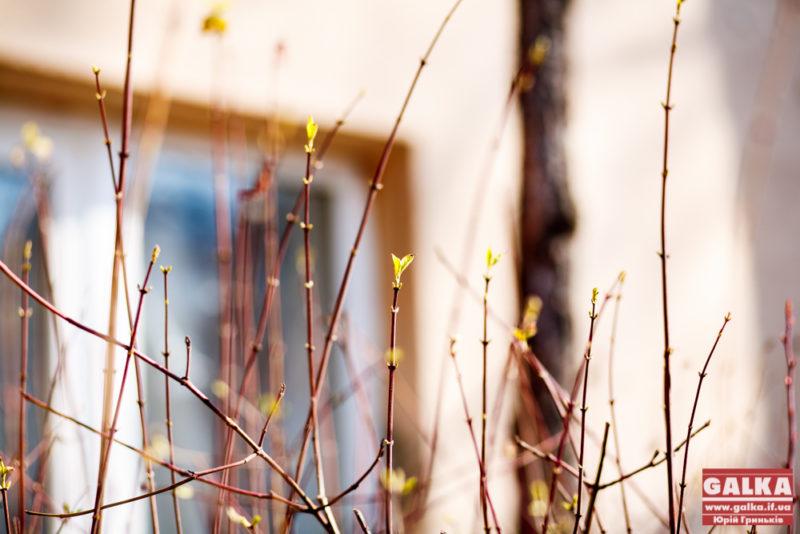 Весна, погода-2877