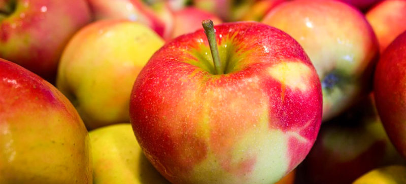 Франківцям представлять книжку «Історія, варта цілого яблуневого саду»