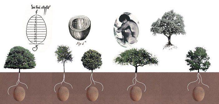 Італійська компанія розробила еко-труни, з яких будуть рости дерева