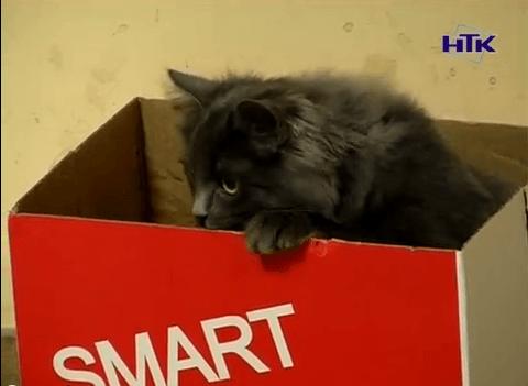Коломиянин привіз додому кошеня із зони АТО (ВІДЕО)
