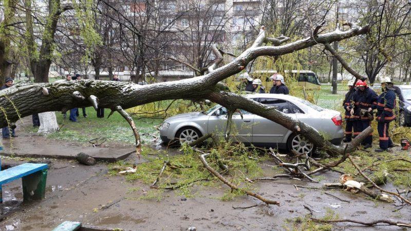 дерево впало на машину