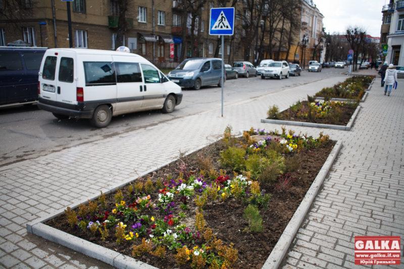 Квіти, садять, білий дім-4842