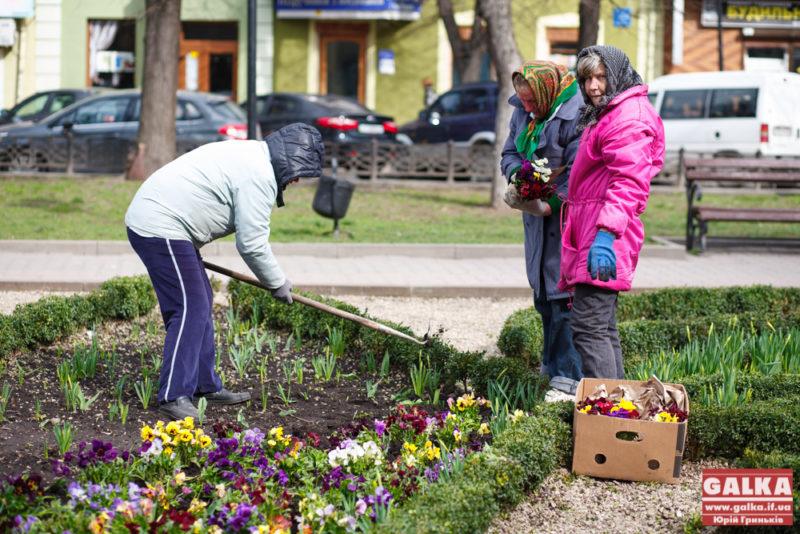 Міцкевича, квіти, клумба, комунальники-4766