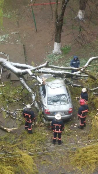 У різних районах міста буревій повалив дерева – постраждала машина (ДОПОВНЕНО ФОТО)