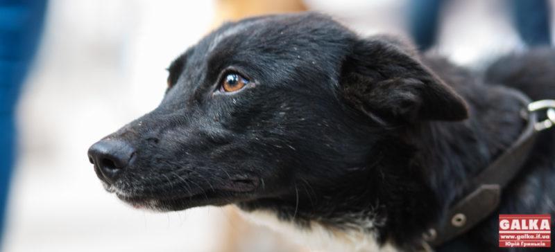 """""""Дім Сірка"""" закликає небайдужих допомогти тваринам ліками"""