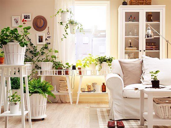 """""""Галка"""" рекомендує: 9 кімнатних рослин, які очищають повітря!"""