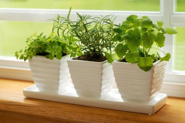 """""""Галка"""" рекомендує: овочі, які легко виростити вдома (ФОТО)"""