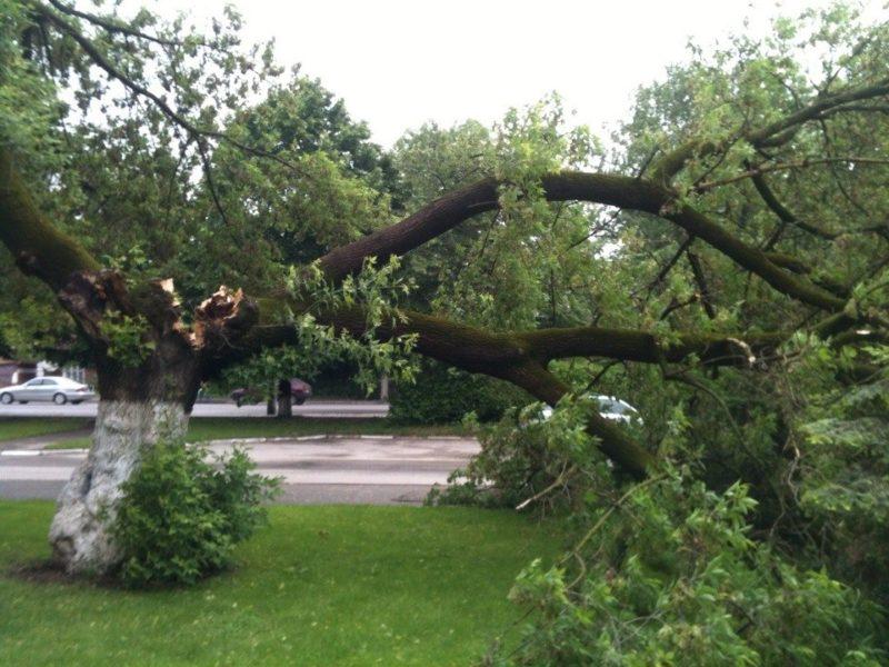 У Калуші на автівку впало дерево