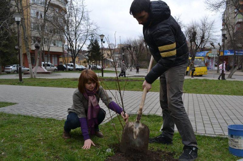 савчук дерево