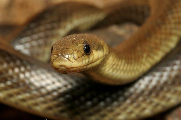 Прикарпатцям загрожують змії. Медики радять, як себе захистити