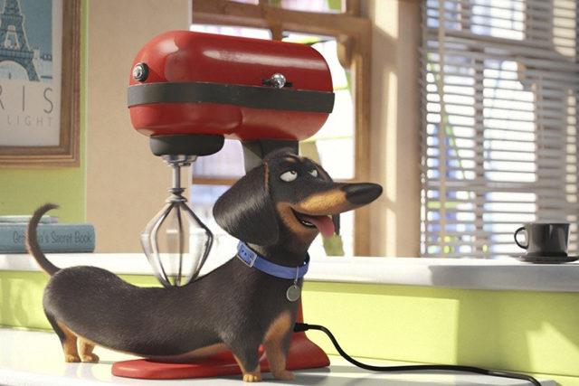 Творці мультика «Бридкий я» створили новий анімаційний фільм «Таємне життя домашніх тварин» (ВІДЕО)