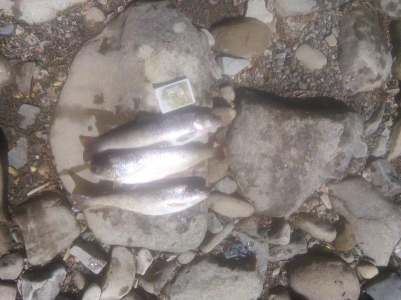 На Прикарпатті спіймали браконьєрів, що спеціалізувалися на струмковій форелі (ФОТОФАКТ)