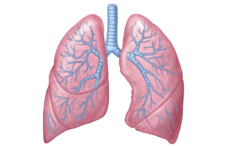 Науковці з'ясували, чому в деяких курців здорові легені