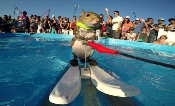 Білка-екстримал проїхалася на водних лижах (ВІДЕО)