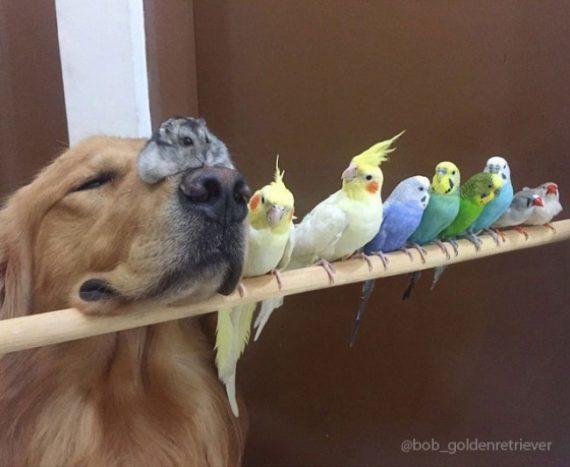 Собака, хом'як і 8 пернатих: справжня дружба абсолютно різних тварин (ФОТО)