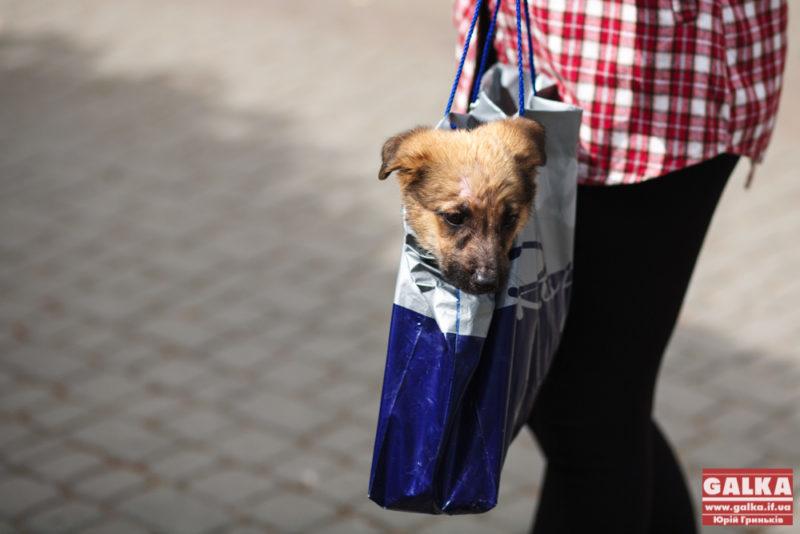У жовтні поблизу Франківська планують відкрити притулок для собак