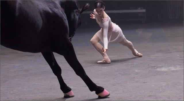 Рекламники показали вражаючий танцювальний баттл між танцівницями різних стилів і конем (ВІДЕО)