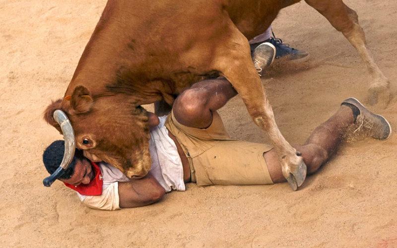 В Аргентині бик увірвався на футбольне поле просто під час гри
