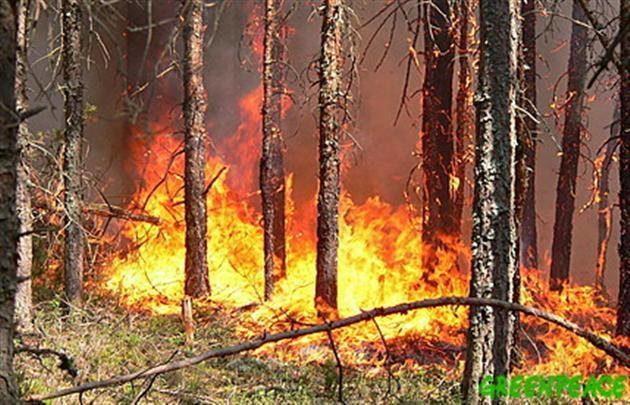 Минулої доби на Прикарпатті зареєстровано 9 пожеж, з них – 6 в природних екосистемах