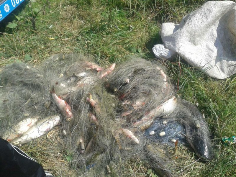 На Прикарпатті чиновник рибохорони виловлював рибу, що занесена у Червону книгу – каже, його заставив начальник (ФОТО)