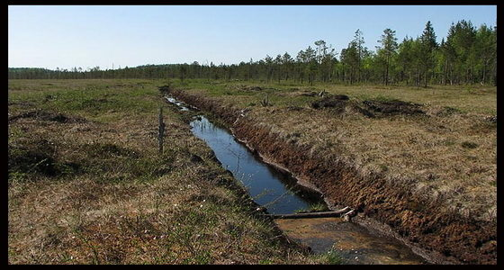 На Прикарпатті меліоровані землі через недогляд можуть знову перетворитися на болото