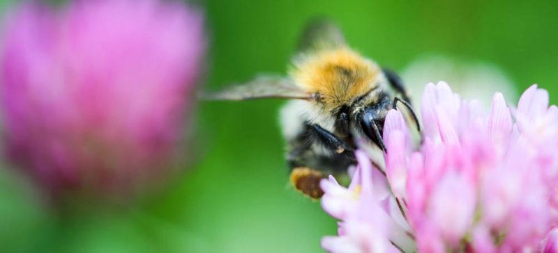 Як рятуватись від укусів бліх, клопів та бджіл: поради франківського лікаря