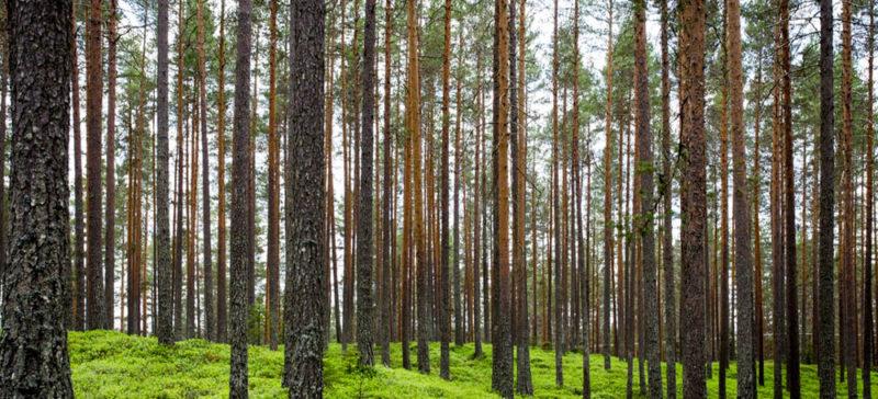 На Коломийщині затримали трьох чоловіків, котрі незаконно рубали ліс