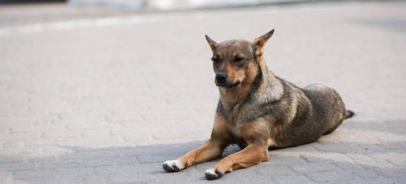 Двох собак та кота врятували на Франківщині цьогоріч