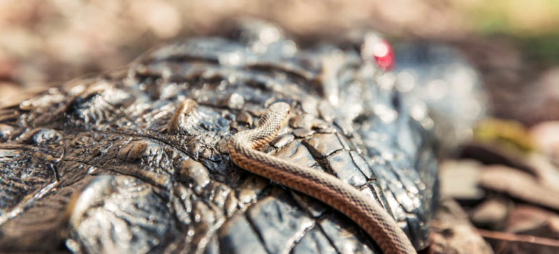У Калуському районі змія вкусила 71-річного чоловіка: прикарпатцям нагадують, як вберегтися від цих плазунів