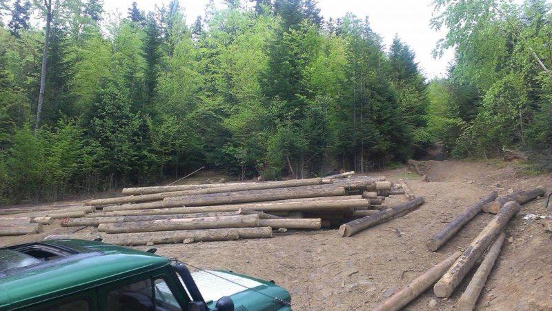 """""""Війська треба вводити"""". На Косівщині місцеві мешканці захопили ліс"""