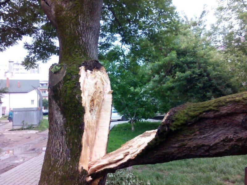 На покрівлю франківського будинку впало дерево