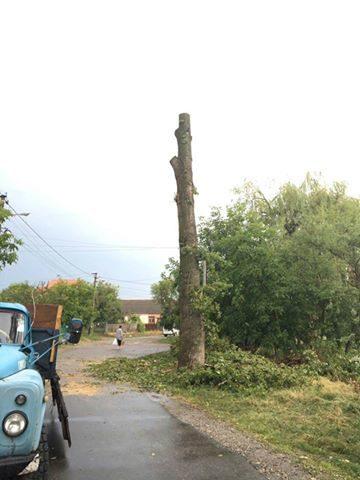 В Опришівцях взялись за зрізку найвищих аварійних дерев в місті (ФОТО)