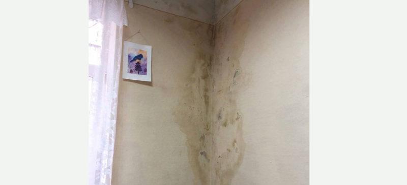 У франківській музичній школі сиро і грибок на стінах, в управлінні кажуть – триває капремонт (ФОТО)