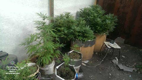 """Операція """"Мак"""": прикарпатцям нагадують про тюрму і штраф за наркотичні рослини"""