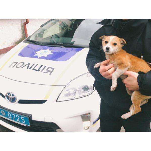 На базі патрульної поліції оселилася чотирилапа Хонда (ФОТО)